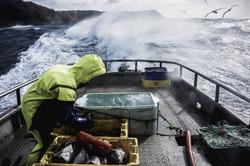 Chatham Islands Fishing