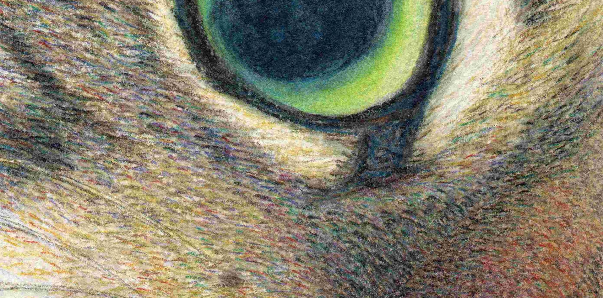 506 A Tabby Cat's Wide Open Eye