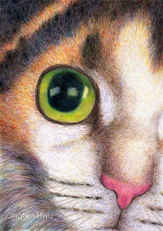 520 - A Calico Cat Face Drawing