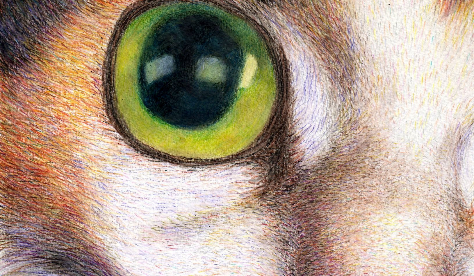 520-a cool calico cat face drawing