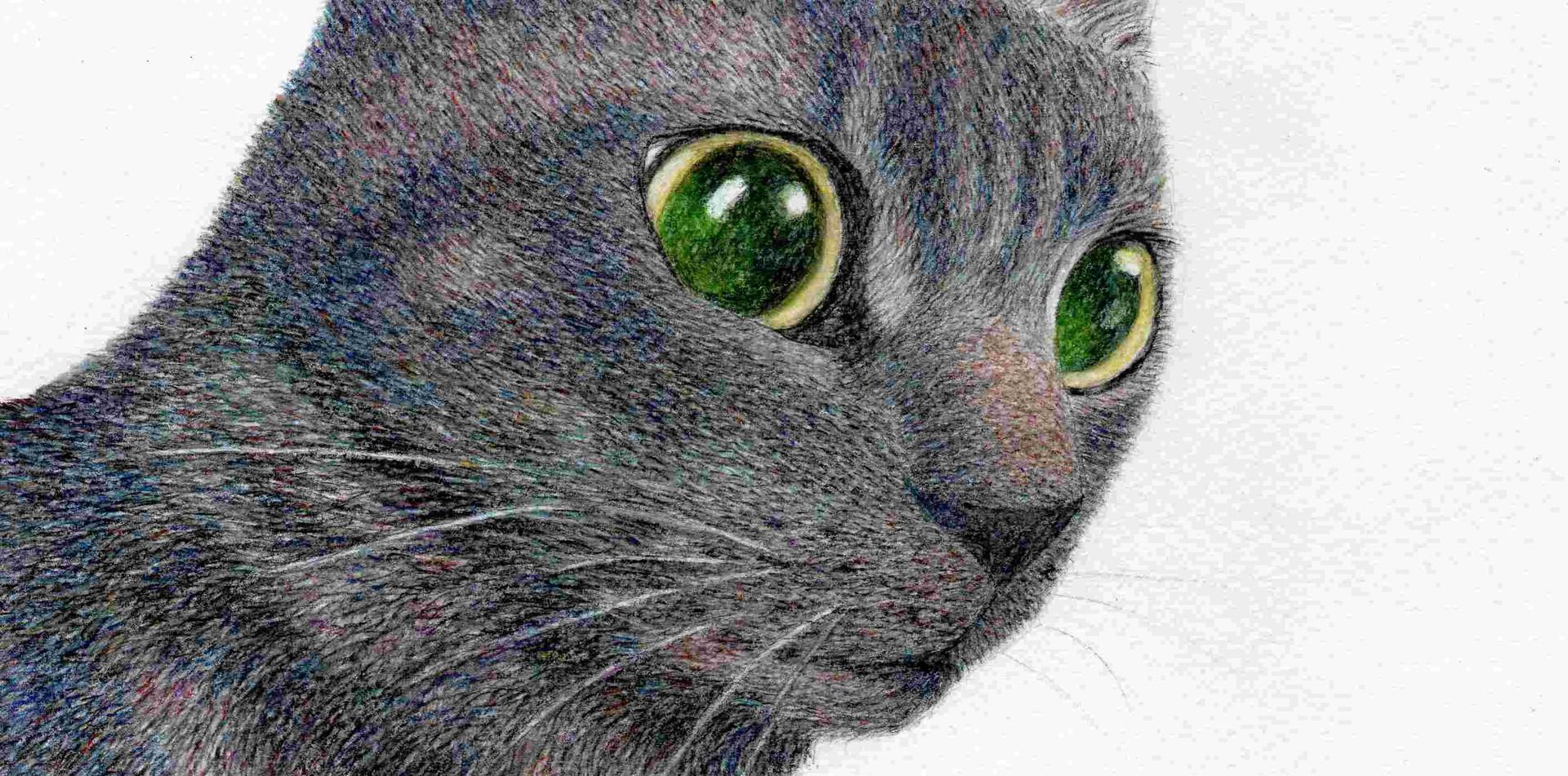 197 - Jack, A Black Cat