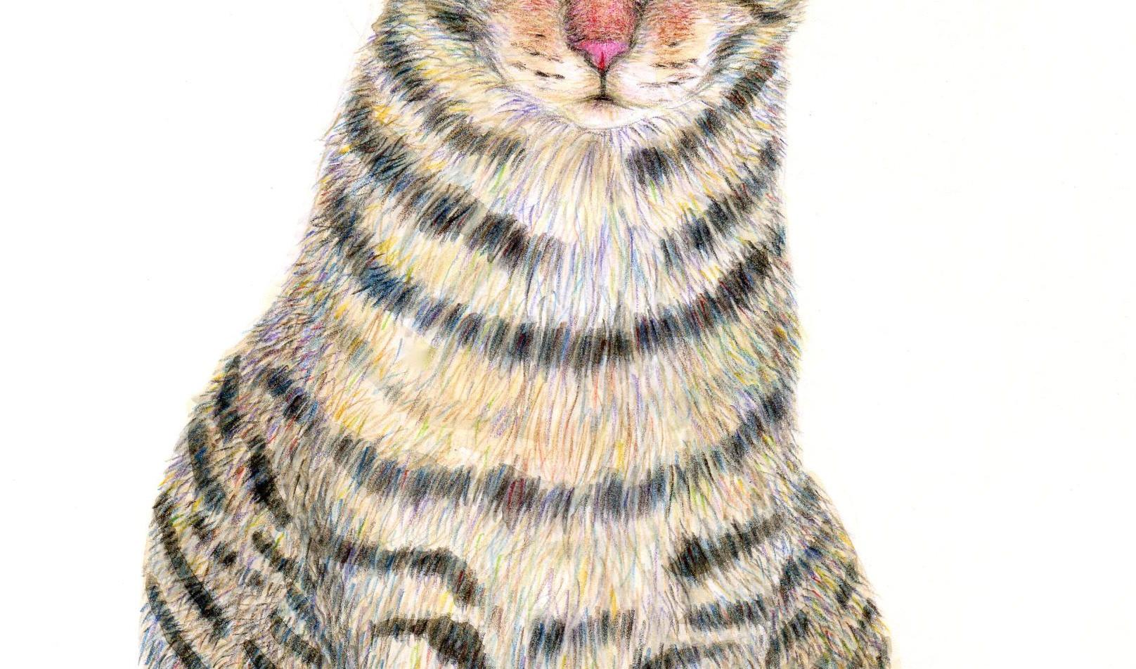 521-a sweet tabby cat