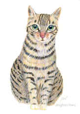 521 - A Tabby Cat Portrait