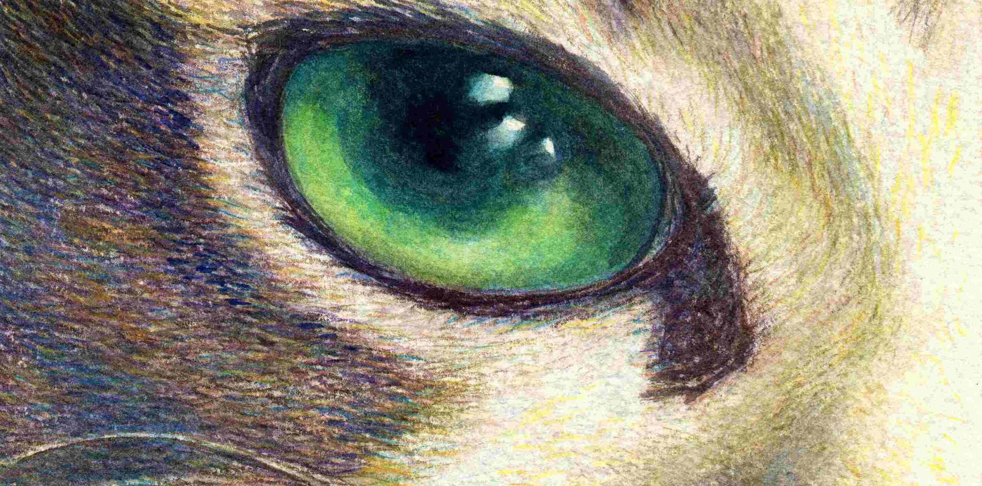 504 - The Eye
