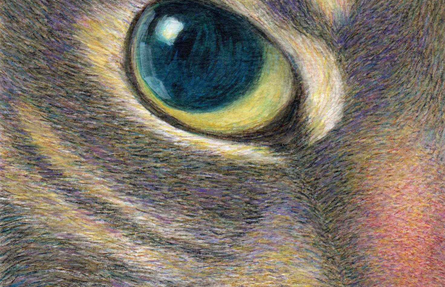 511 - A Cat With Smart Eyes