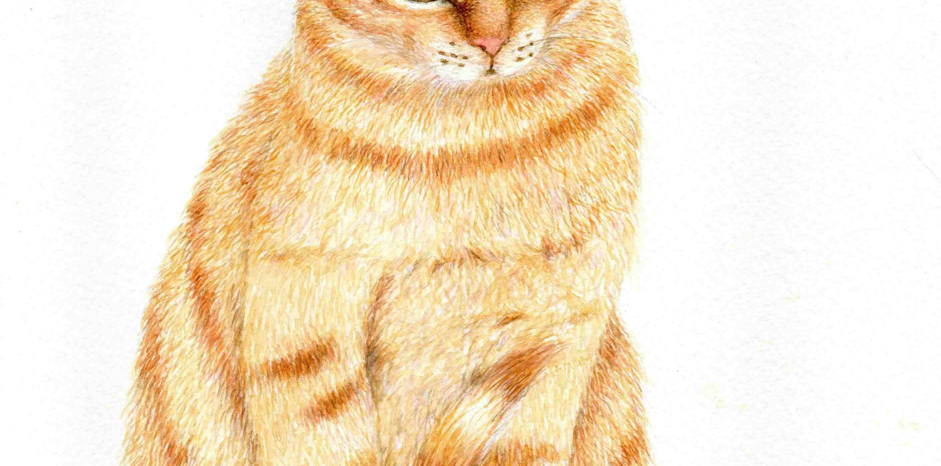 515 - A Ginger Tabby Cat