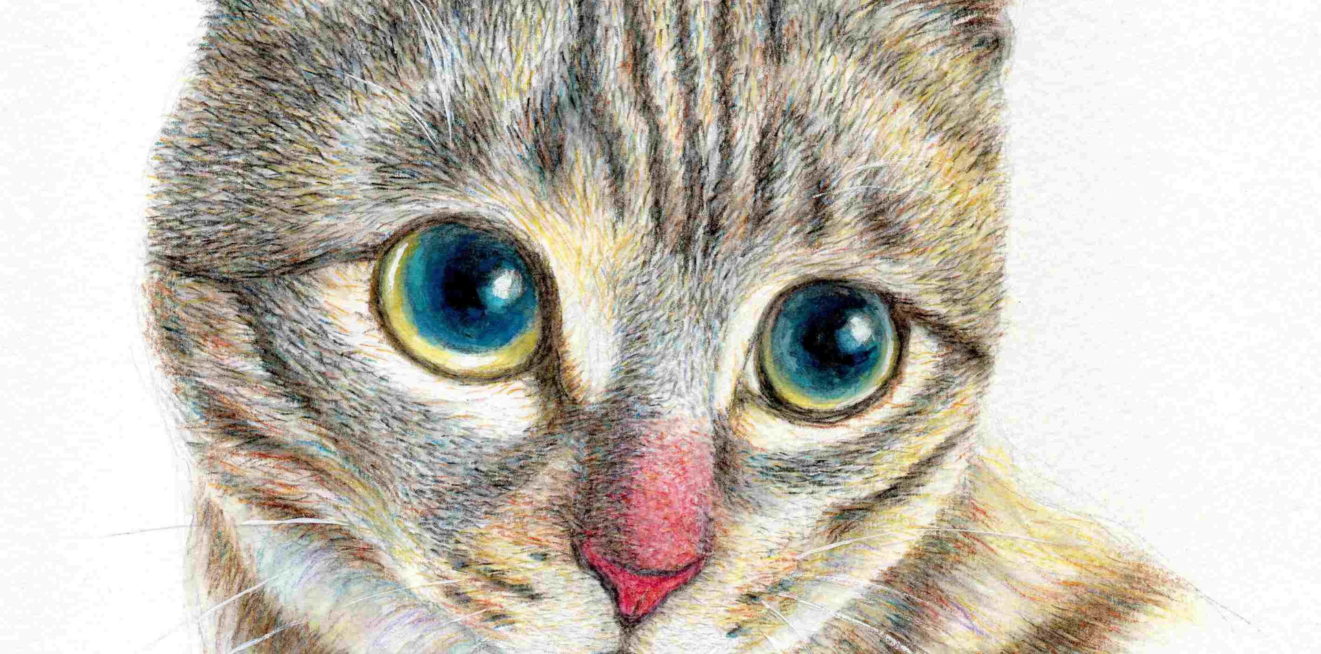 514 - A Grey Tabby Cat
