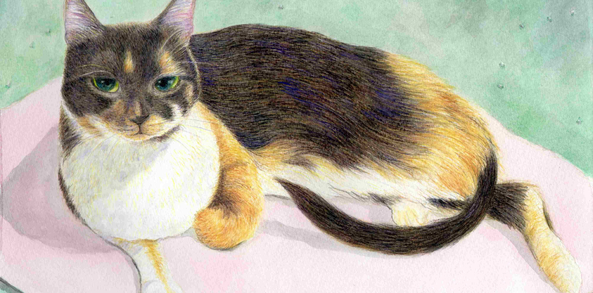 510 - A Calico Cat On The Pink Mat