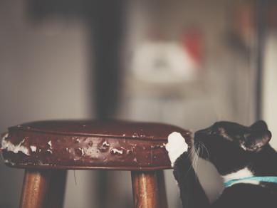 Kedim Koltukları Tırmalıyor, Ne Yapmalıyım?