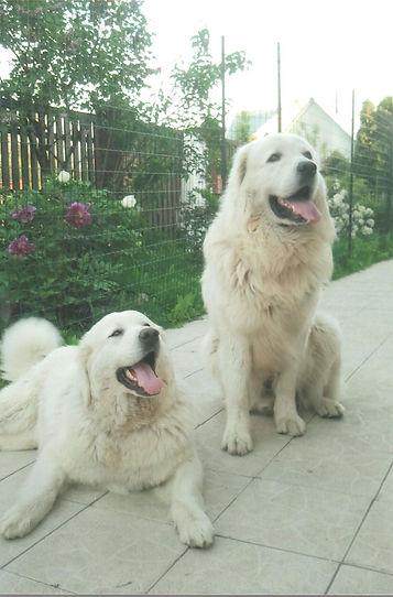 dogs0310012.jpg