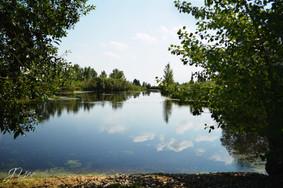 natureWM5.jpg