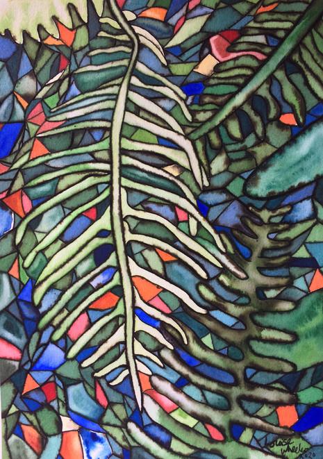 Ferns Curve