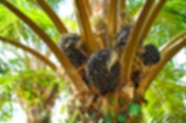 Palm Oil #1.jpg