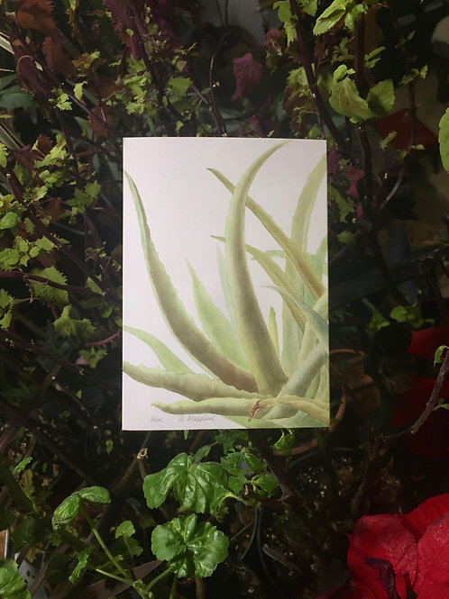 3 Blank Notecards from Original Artwork - Printed Watercolor - Aloe