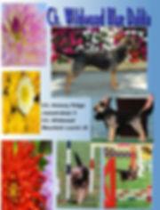 Dahli Web Page.jpg