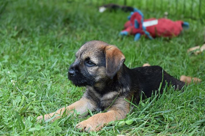 Behavior Training for Dogs and Puppies