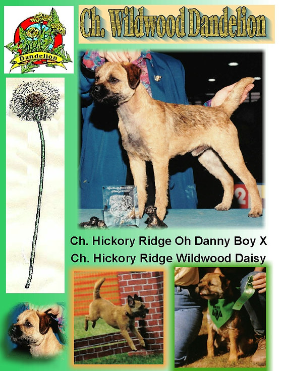 Dandy Webpage.jpg