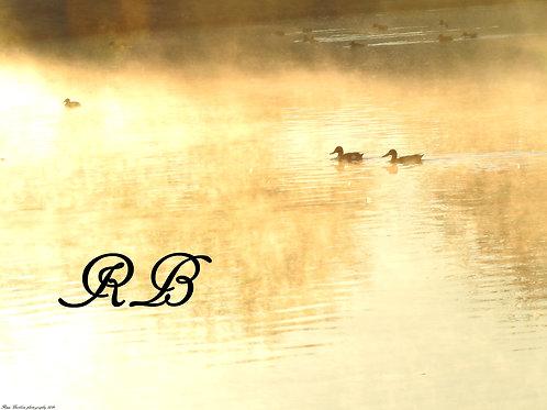 Ducks in the Mist of Morning 1