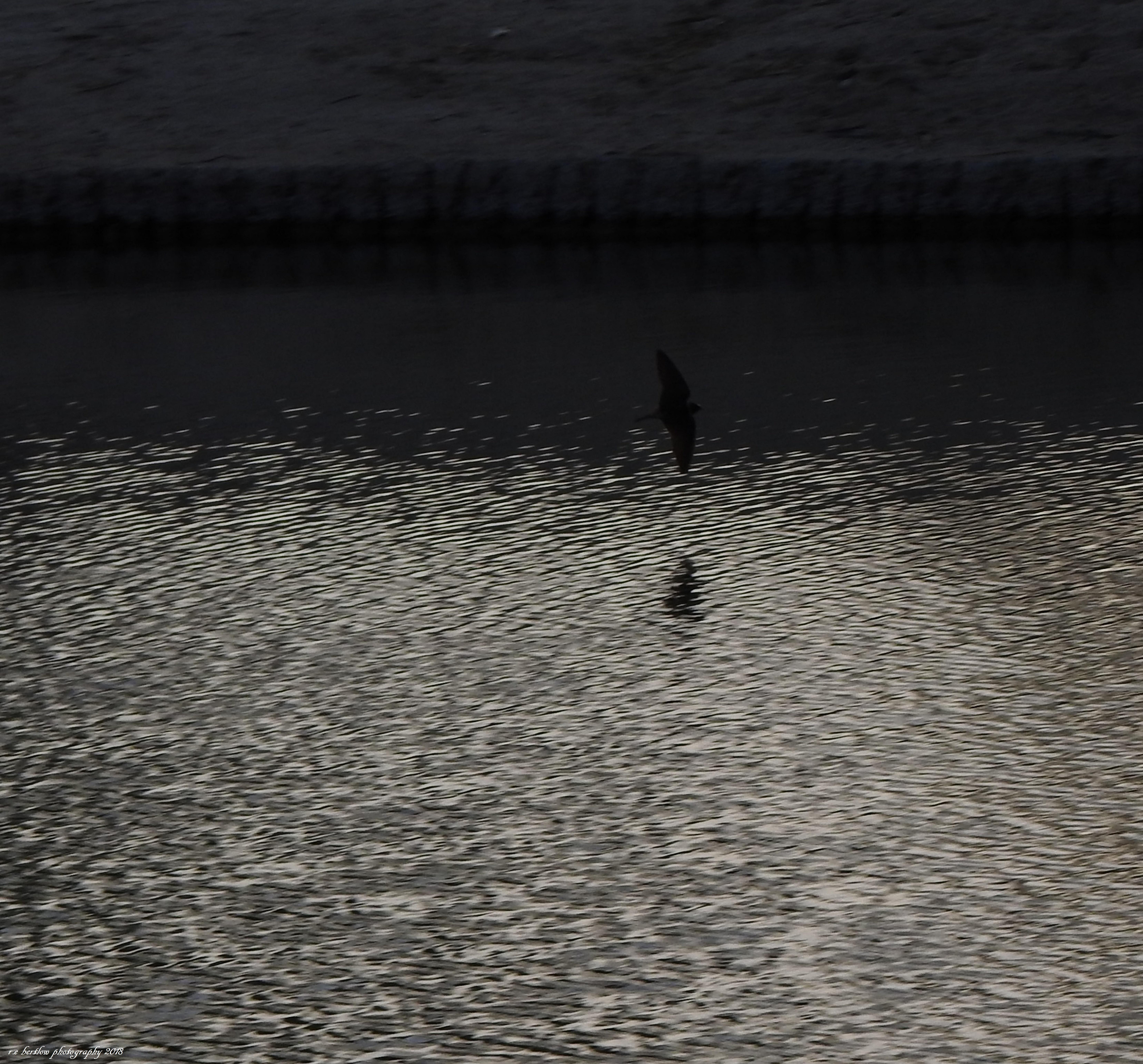 Bird over water II