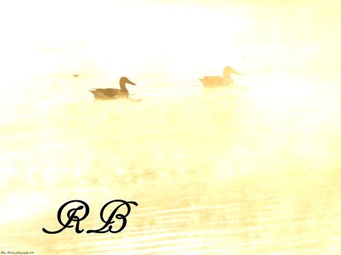 Ducks in the Mist of Morning 2