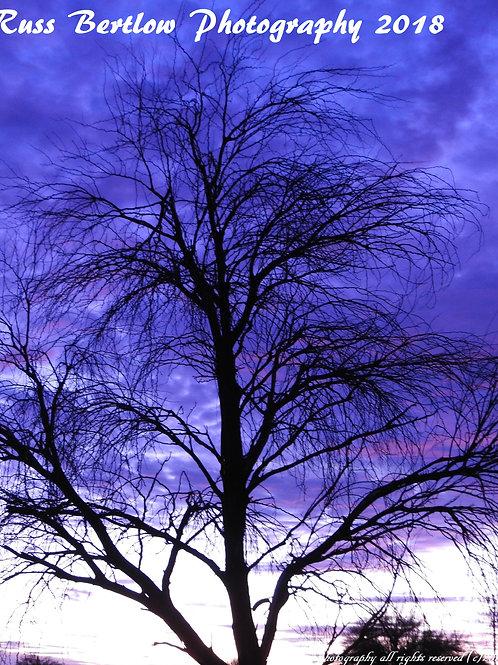 A princely sky
