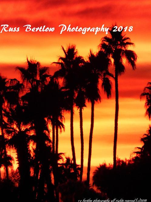 The vibrant palms