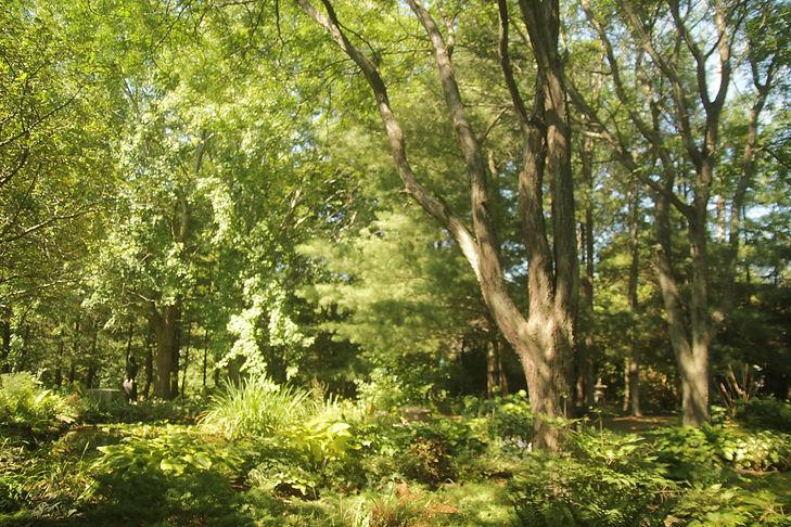 spring-forest.jpg