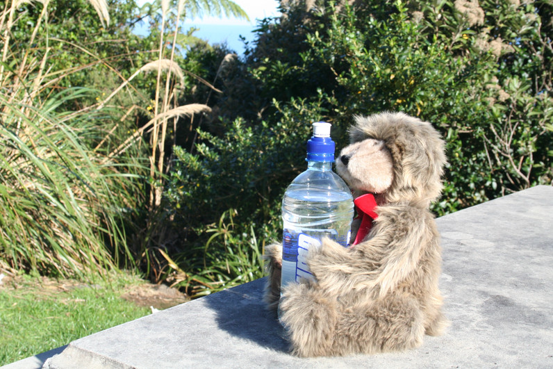 Stowie's thirst for adventure needs quenching