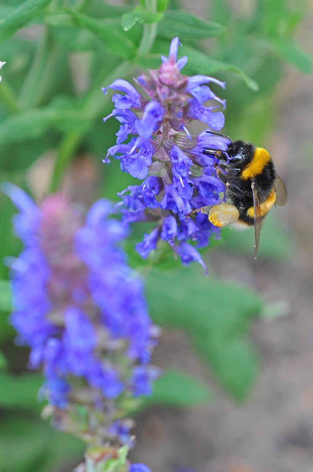 Bee; flower