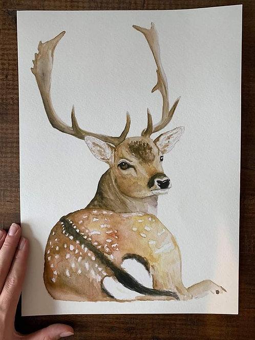 """Laying Up"" Fallow Deer"