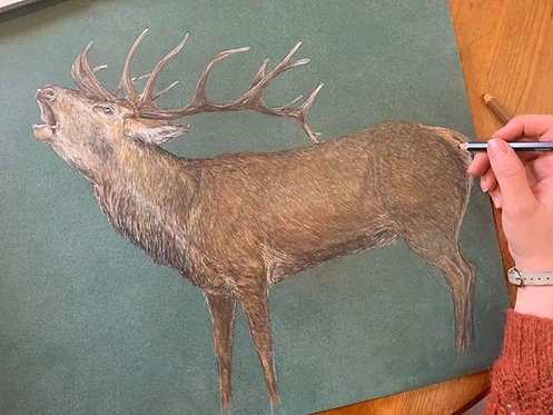 The Roaring Red Stag