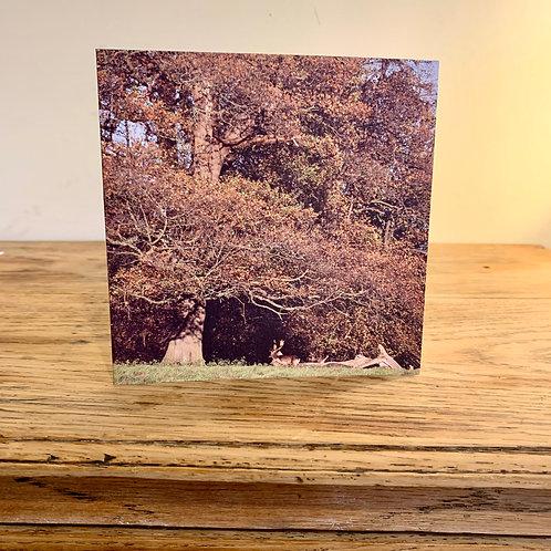 Under the Oak - Greetings Card
