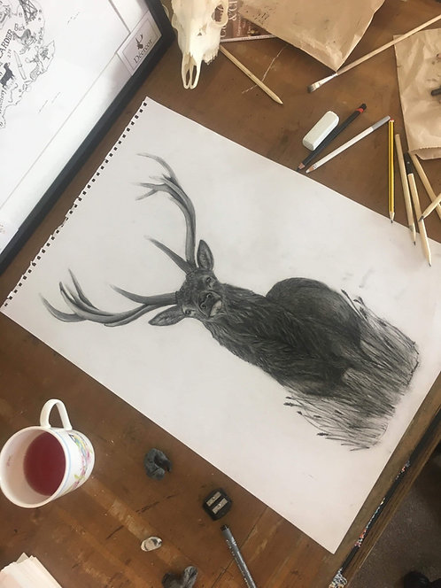 The Charcoal stag