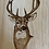 Thumbnail: Board with Whitetail Engraving