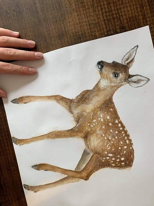 Roe Fawn
