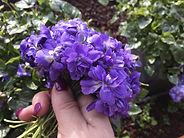 Violets_Producer.jpg