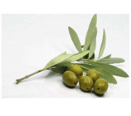 French-olives.jpg