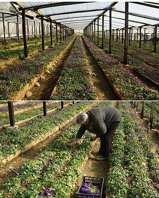 violet_supplier_france.jpg