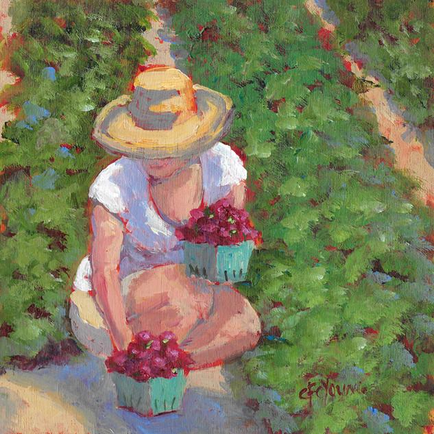 Strawberry Picker 2, 2019