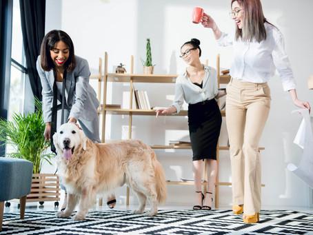Animais no trabalho: entenda as vantagens dessa tendência!