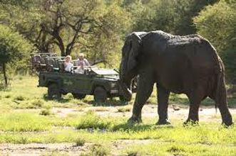Kruger Park (3).jpg