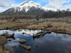 Parque Nacional Tierra Del Fuego (1)