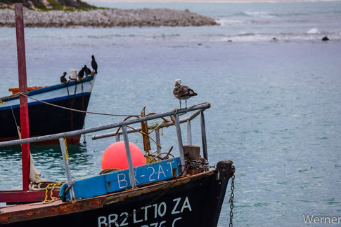 Bird on a boat at the harbour.