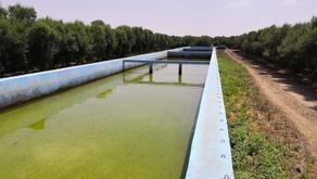 FR: L'agriculture de précision pour intensifier durablement les productions marocaines
