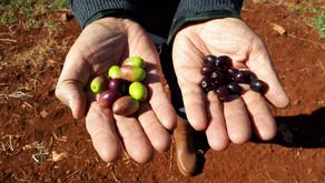 Cultivez précis : cultivez rentable et durable