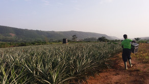 A renewed vision for African Agriculture & Agro-industries