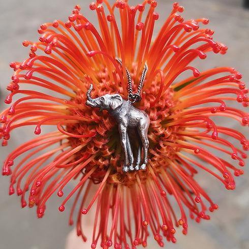 elephunk-orange
