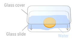 METT image 1.webp