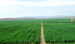 Sugar cane fields_LR.jpg
