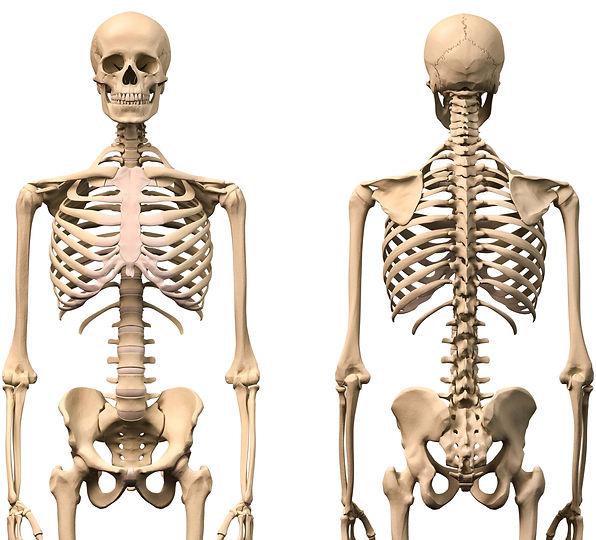 esqueleto respiracion-min.jpg
